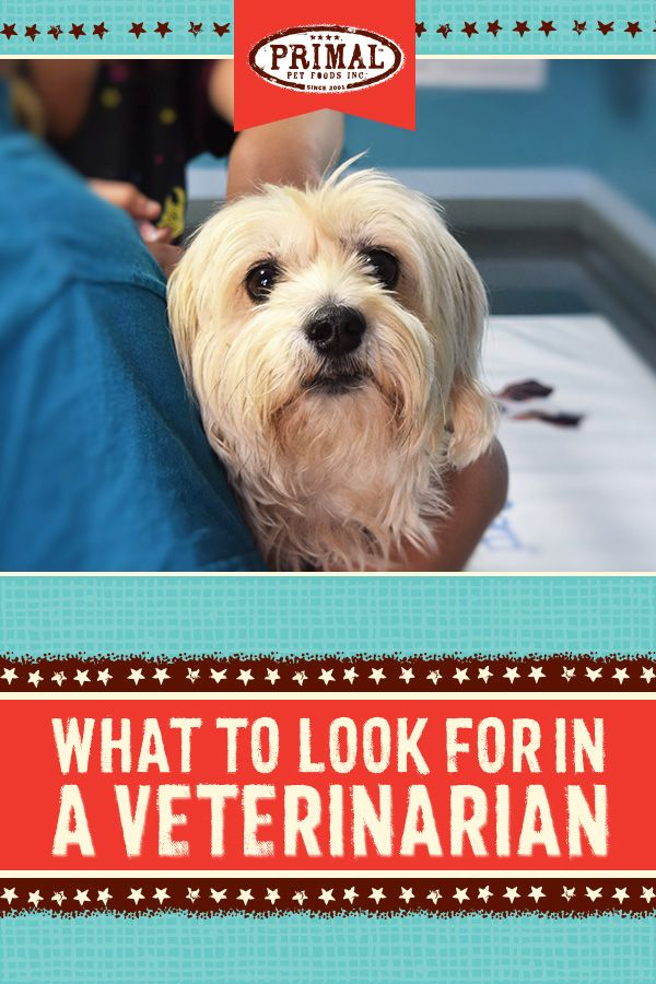 Choosing The Right Veterinarian Veterinarian Pet Health Food