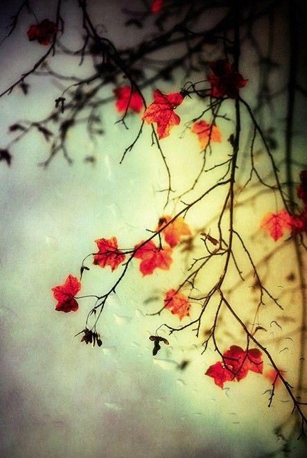 """""""Otoño manso, yo me poseo y me inclino ante tus aguas para beber el cielo, suave fuga de árboles y abismos"""". - Salvatore Quasimodo #thingsweloveautumn"""