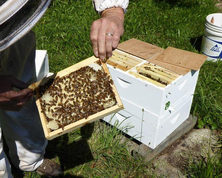 Build a HiveThe Beekeepers « Bee keeping, Bee