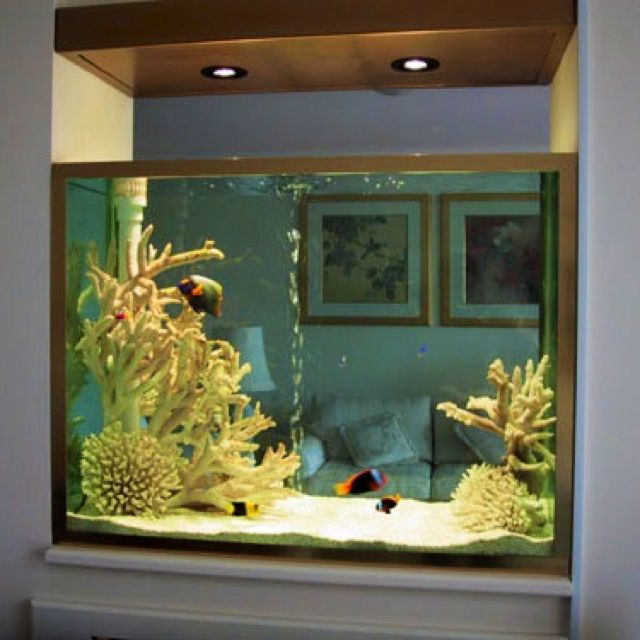 172 best fancy fish tanks images on pinterest for Fancy fish tanks