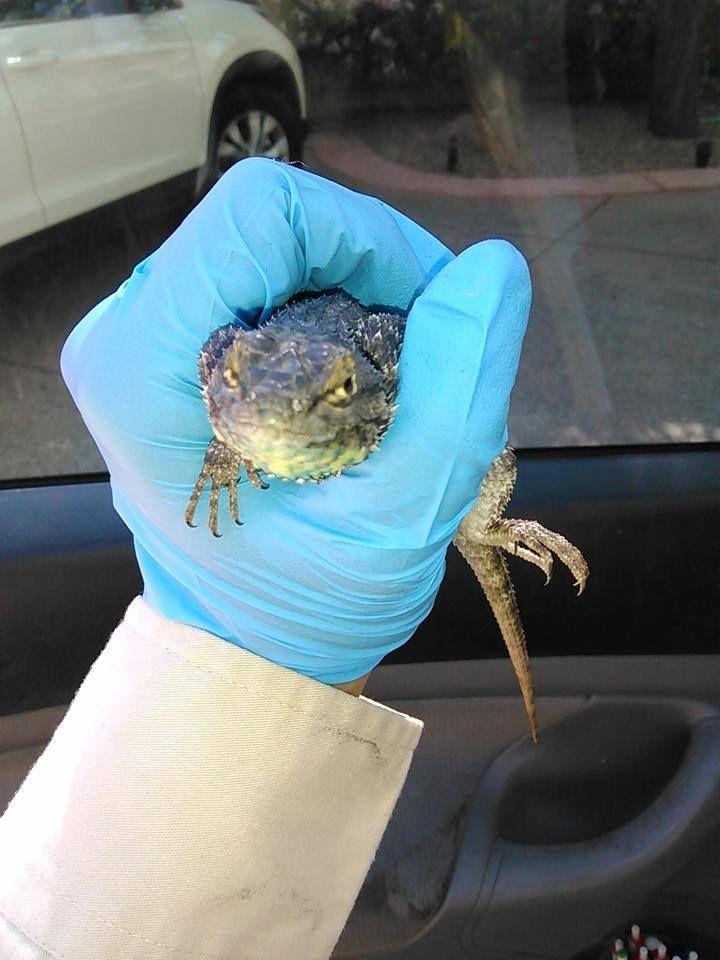 #Lizard :)