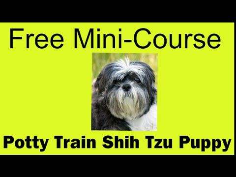 Wow Potty Train Shih Tzu Puppy Free Mini Course On Shi Pinterest Puppies And Dogs