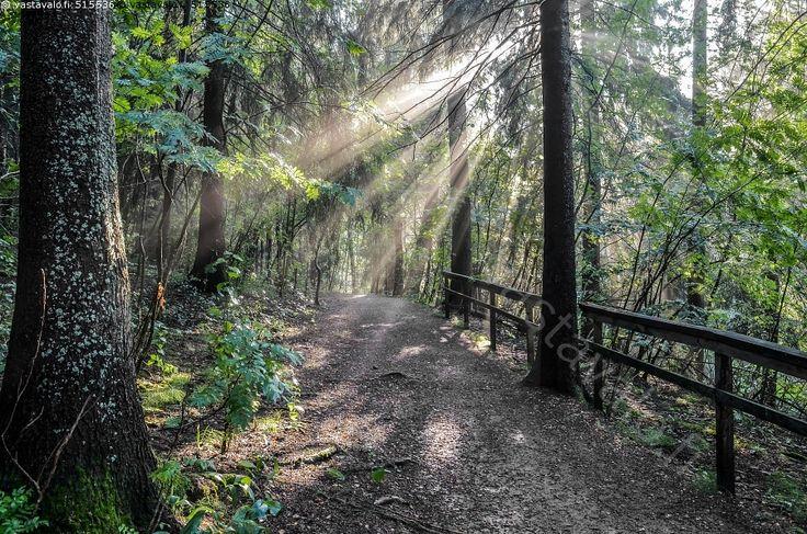 Metsäpolku - metsä metsäpolku kuusimetsä kuusi auringon säde säteet valonsäde hämärä usva sumuinen metsämaisema puiden kaide metsässä puiden lomasta puut rungot usvainen polku ulkoilureitti ulkoilualue Pitkäkoski