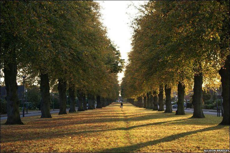 Autumn. Beverley Road, Leamington Spa.