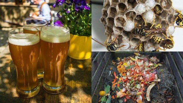 7 usi della birra in giardino   Guida Giardino