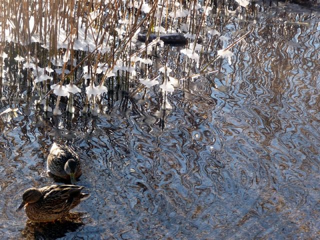 Jemina Staalon Veden vuosi 2: Sorsia ja vieläkin Staalo kävelee vetten päällä