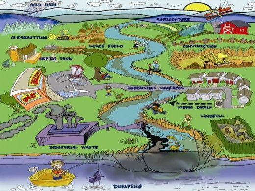 Good visual about the source and impact of water pollution.