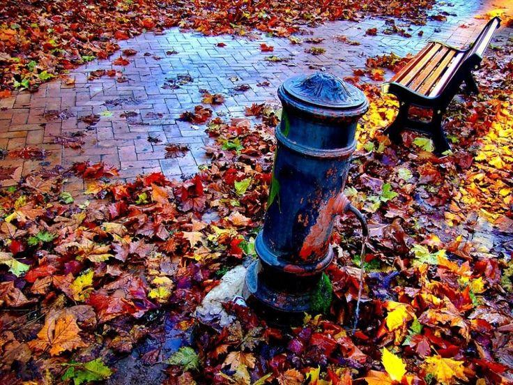 Итальянская осень. Галерея фото. Обсуждение на ...