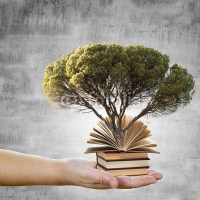 Conceptos de educación y respeto al medio ambiente