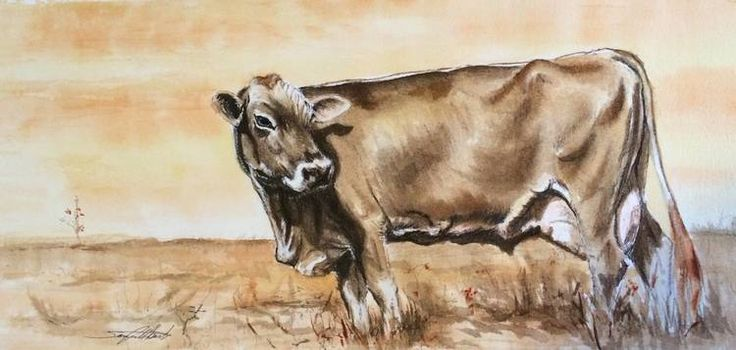 Jersey Cow. Pen & ink with sepia water colour on paper. By Sara Cuthbert.