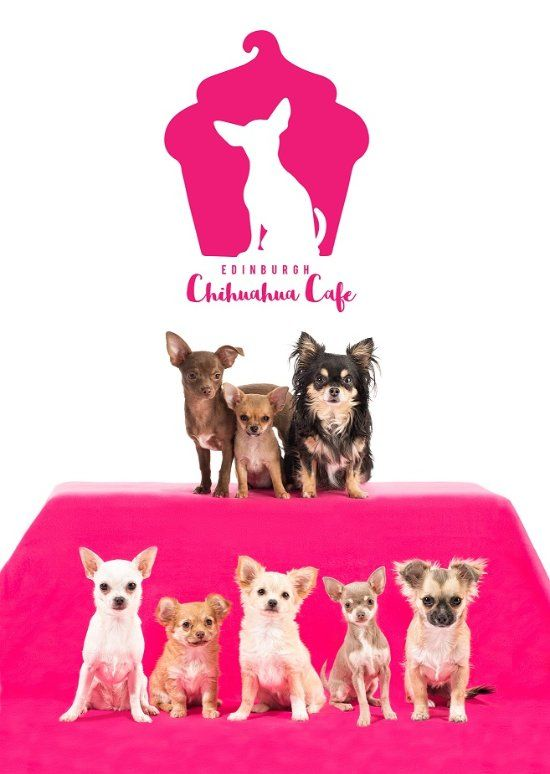 The Ultimate Dog Cafe Chihuahua Cafe In Edinburgh Dog Cafe