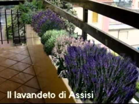 Progettare giardino e terrazzo; realizzare un' aiuola