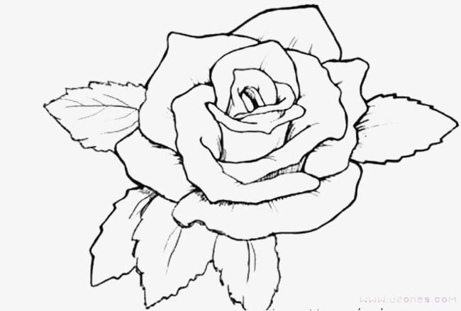 เส นก หลาบ Rose Coloring Pages Flower Coloring Pages Tattoo Coloring Book