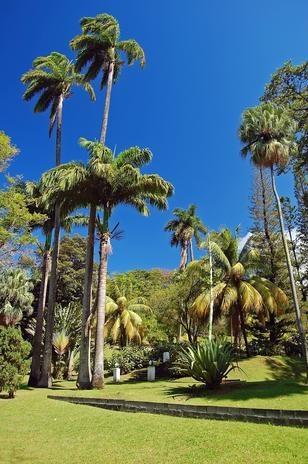Jardim Botânico de São Vicente, em Kingstown, São Vicente e Granadinas