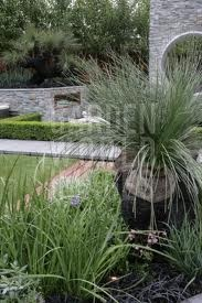 garden design using Australian native plant Black boy (xanthorrhoea)