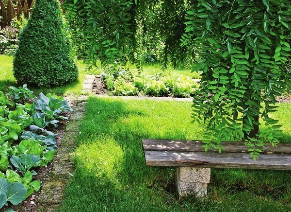 В качестве бордюров можно использовать каменные дорожки - они отделят газон от грядок и клумб.