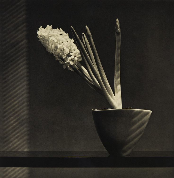 Robert Mapplethorpe, copper plate photogravure