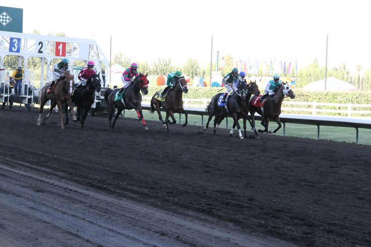 live horse racing today