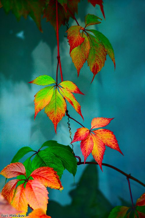 Amazing leaves - colour inspiration for  Latch Farm Studios http://www.facebook.com/LatchFarmStudios