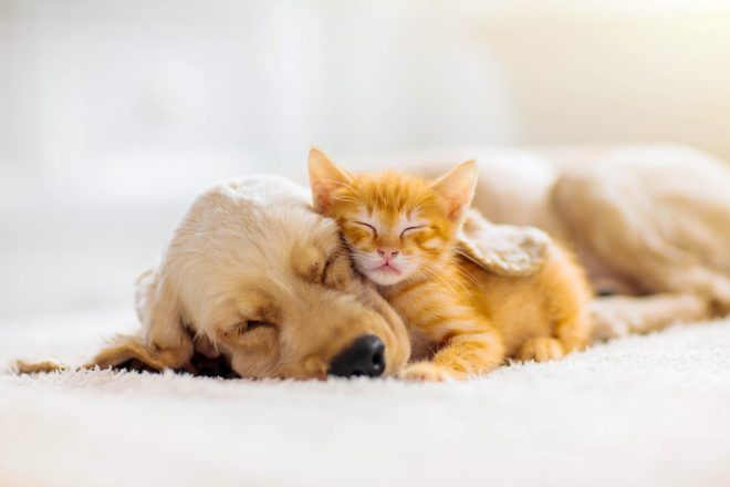 Festival Of Sleep Day In 2020 With Images Kittens And Puppies