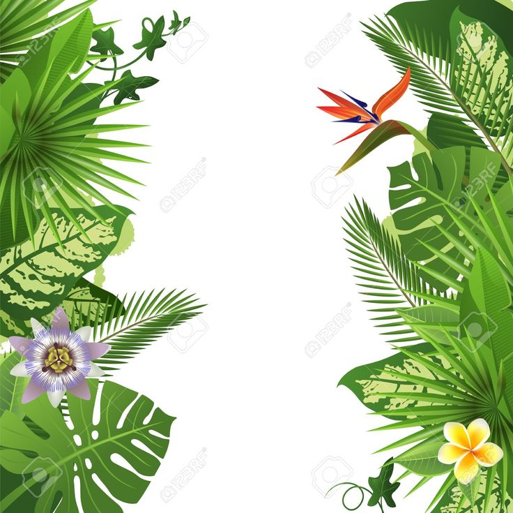 Tropical Background With Flowers And Plants Royalty Free Cliparts, Vectors, And Stock Illustration. Pic 29778741.