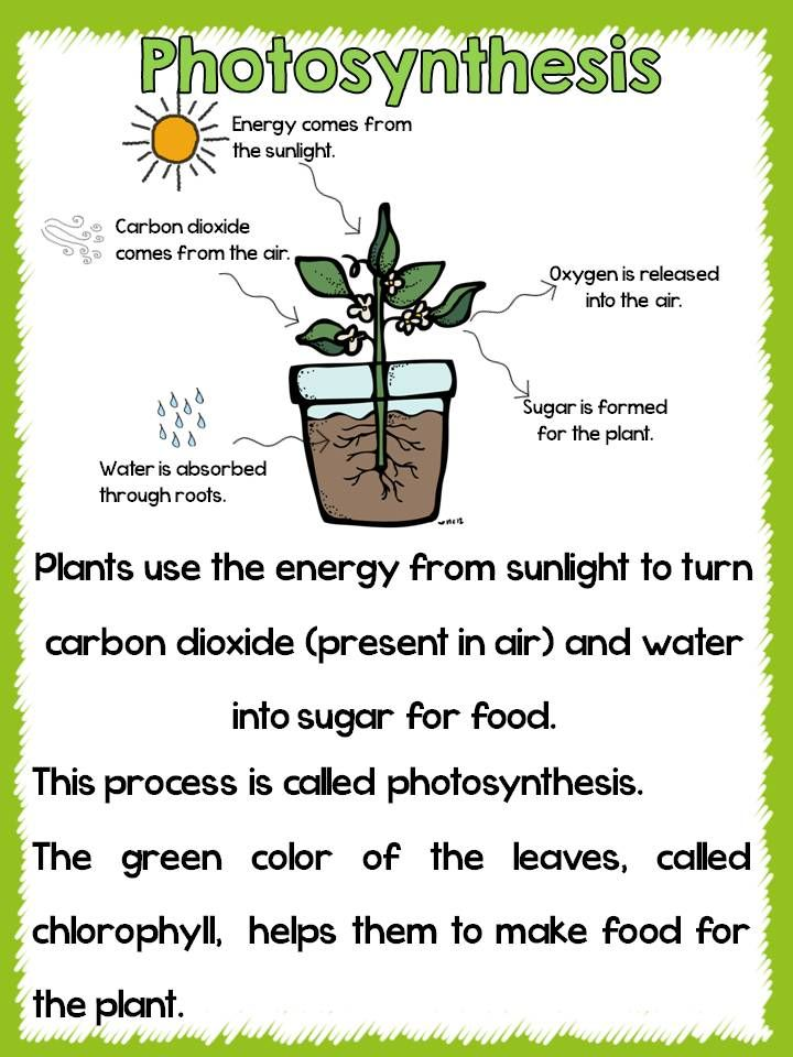 photosynthesis worksheet elementary