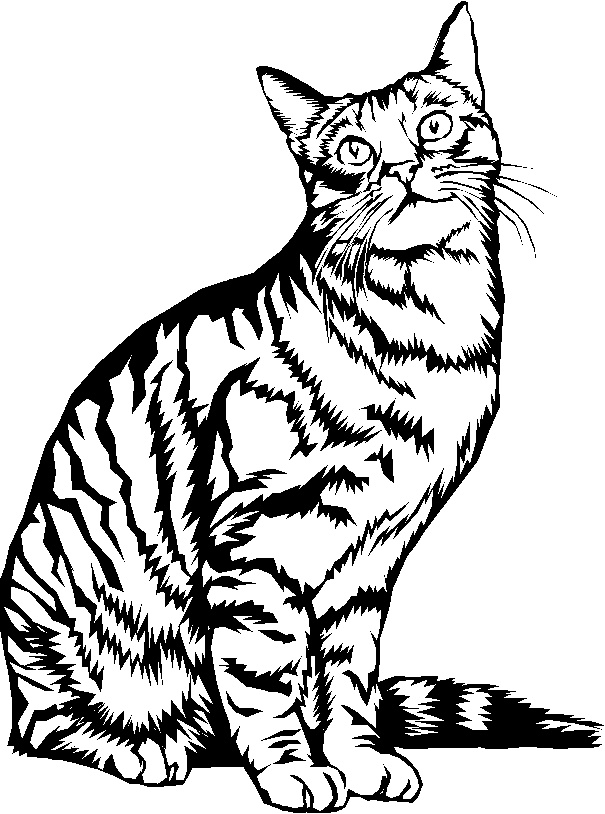 It is an image of Trust Line Drawing Saut De Chat