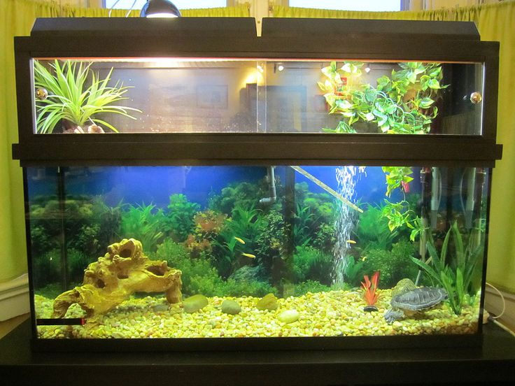 56 best turtle tank ideas images on pinterest fish for Fish tank turtles