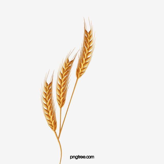 ومن ناحية رسم الكرتون التوضيح دقيق القمح القمح سنبلة القمح المحاصيل الزراعية Png وملف Psd للتحميل مجانا How To Draw Hands Abstract Artwork Artwork
