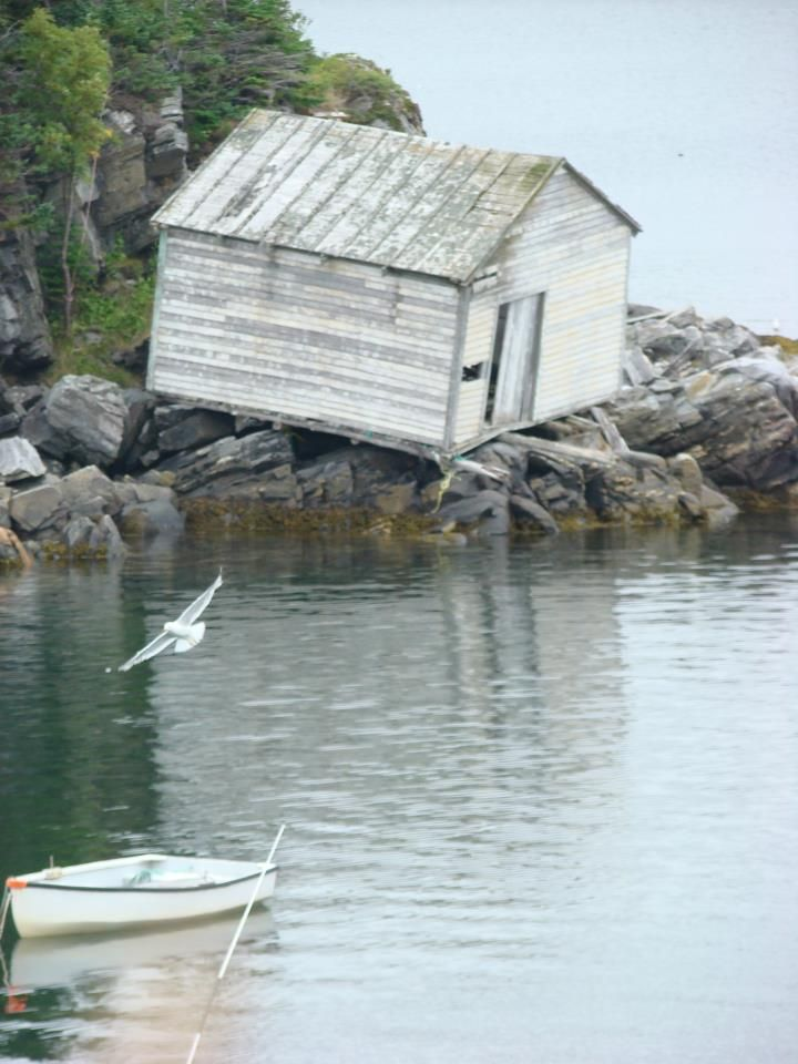 Abandoned shed in Pacquet, Newfoundland