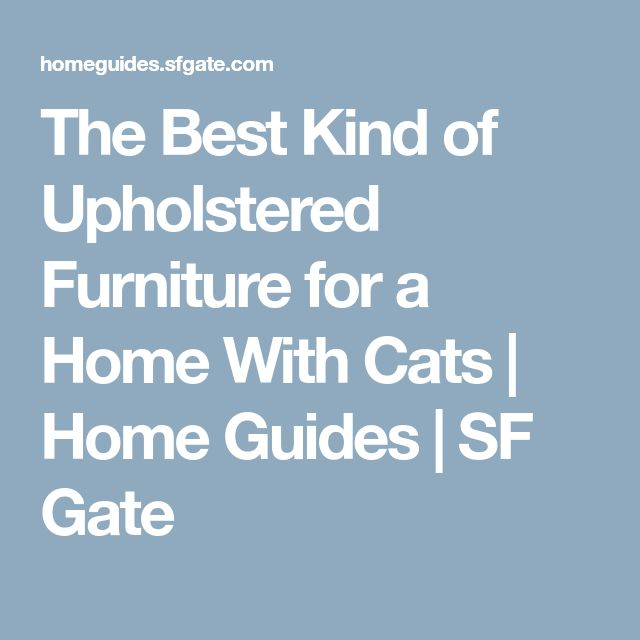 The Best Kind of Upholstered Furniture for a Home With Cats | Home Guides | SF Gate