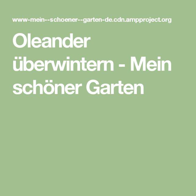 Oleander überwintern - Mein schöner Garten