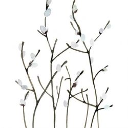 """""""Pussy Willows"""" is an original watercolor painting.   The catkins on the willow are a sure sign of spring."""
