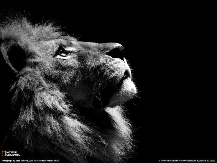 photography | Lion Profile Photo, Animal Wallpaper - National Geographic Photo of ...