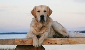 Kelp Care for dogs with arthritis, skin conditions and aids with immune system/digestion