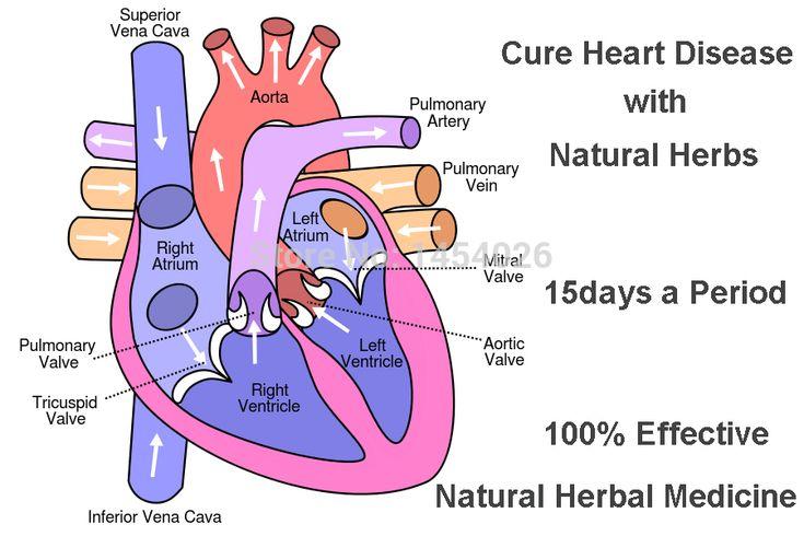 Malattie Cardiache Medicina di Piante Naturali, curare Malattie Cardiache dalla Medicina Tradizionale Cinese Terapia A Base di Erbe