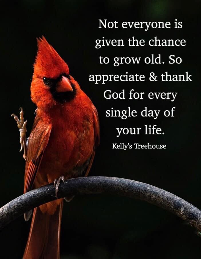 Gratitude Meme Growing Old Quotes Inspirational Memes Thank Gid For Each Day Growing Old Quotes Growing Up Quotes Inspirational Words Of Wisdom