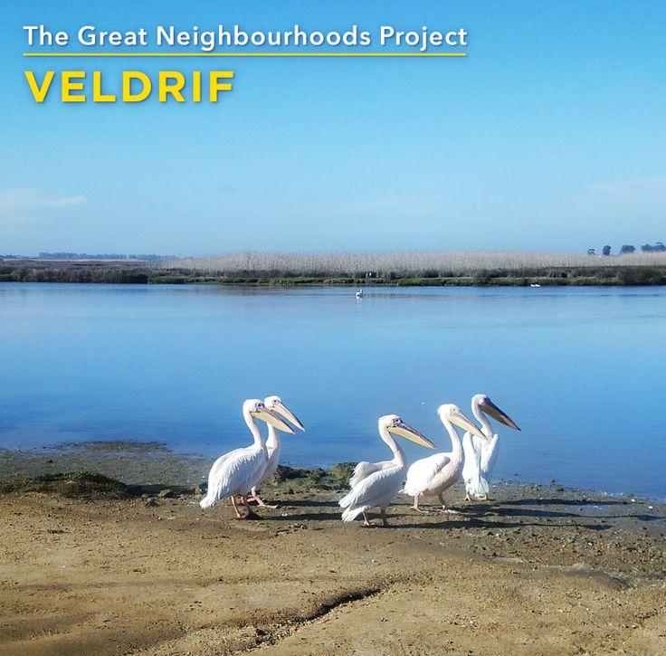 We love Veldrif because of its feathery locals (http://www.rawson.co.za/neighbourhoods)