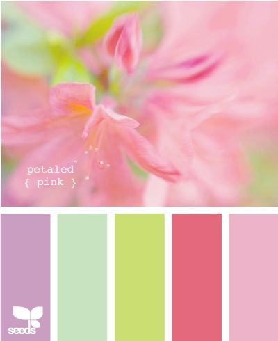 petaled pinkLittle Girls, Design Seeds, Color Schemes, Spring Colors, Girls Room, Colours Schemes, Colors Palettes, Colors Schemes, Girl Rooms