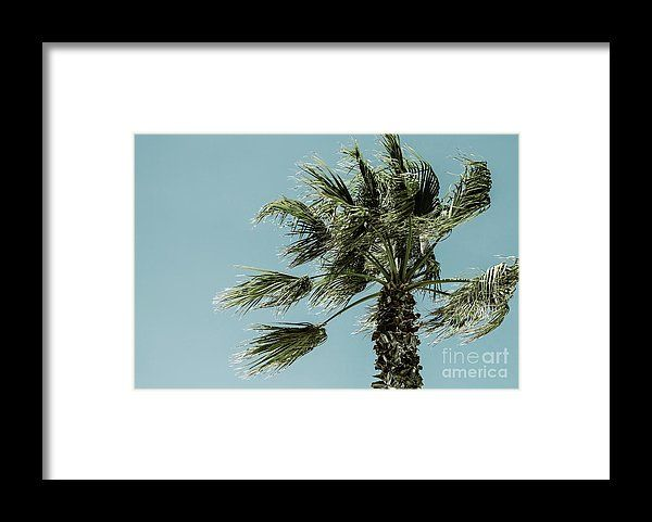 Green Palm Tree On Clear Blue Sky Framed Print