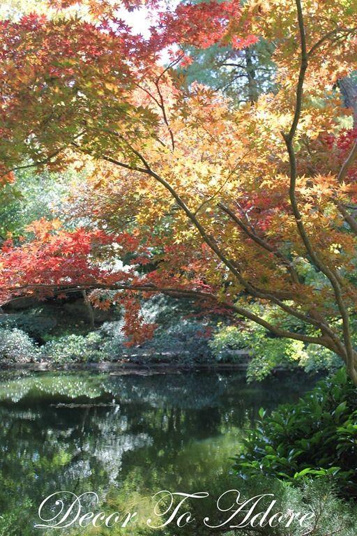 The Official Botanic Garden Of Rutgers: 17 Best Ideas About Texas Fall Garden On Pinterest