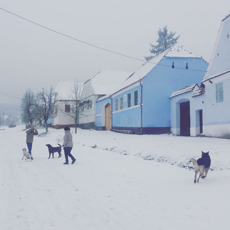 playing in the fresh snow on the main road in Viscri village, Transylvania