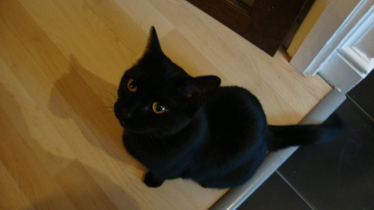 http://fosteringcats.co.uk/wp-content/uploads/2013/05/DSC02251.jpg