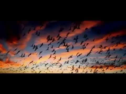 Интересный документальный фильм о смысле жизни - YouTube
