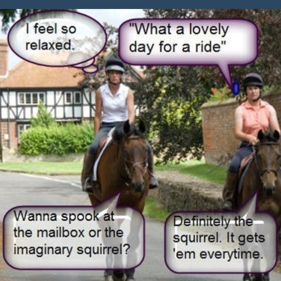 Funny Pony Quotes: 254 Best Images About Horse Back Riding Quotes On