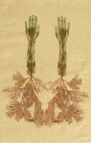Valérie Hammond, Kiki Coral Tree, 2005