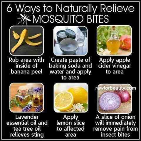 remedios picadura de mosquito