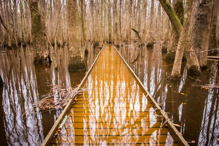 Picture of submerged boardwalk in Congaree National Park, South Carolina