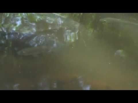 Free Stock Video Loops   Creeks Rivers Trees Forests 054 of 95