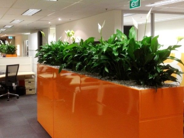 Orange Cabinets by Paul Pph on 500px#planthire #sydney #plantrental #indoorplanthire #office planthire